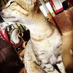 Photo de Bamboo Bar