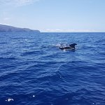 Φωτογραφία: Oceano Whale Watching La Gomera