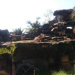 バリ サファリ & マリンパークの写真