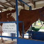 Bilde fra Green Meadows Petting Farm