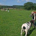 Beautiful Brecon Beacons scenery on the Sheep Treks