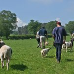 A fun and engaging way to spend the afternoon (& with a sheep!)