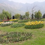 Tulips more tulips
