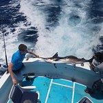 catching big marlin in Puerto Vallarta