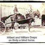 An old picture of Birdy, the blind horse.