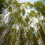 Zdjęcie Bamboo Forest Street