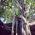Photo of Los 7 Cenotes