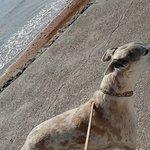 Zdjęcie Paignton Beach