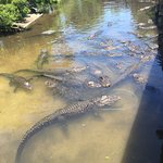 St. Augustine Alligator Farm Zoological Park resmi