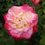 Foto de The Butchart Gardens