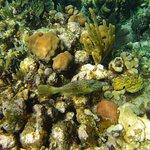 West Bay reef-filefish