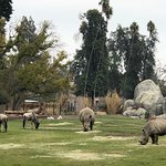 Some amazing Zoo grounds I've seen in a long time!