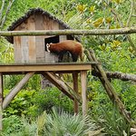 Фотография Zoo de La Fleche