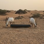 Platinum Heritage Luxury Tours and Safaris resmi