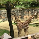 From the zoo