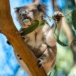 Photo de Hanson Bay Wildlife Sanctuary