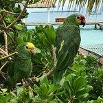 Foto de King Lewey's Island Resort