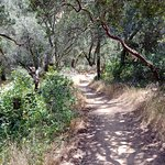 Chiles Creek Trail