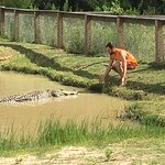 Gator Country Fotografie