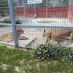 Zoo Brasov – fénykép