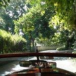 Βόλτα με αυτοκίνητα - αντίκες στο δάσος της Αβάνας!