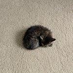 """""""Больше Шерсти!"""": когда ты одинокий маленький кот.. Помни: где-то тебя точно очень-очень ждут."""