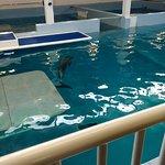 Foto de Clearwater Marine Aquarium