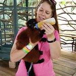 Mr Jefferson the lemur
