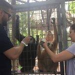 Feeding the monkeys