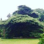 Photo of Clyne Gardens