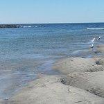 Bild från Higgins Beach