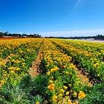 Carlsbad Flower Fieldsの写真