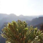 Minimal plants along the way to Skeleton Point on South Kaibob Trail