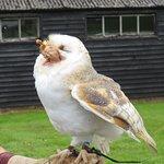 barn owl meal