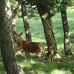 ภาพถ่ายของ Parco Faunistico di Ranco Spinoso