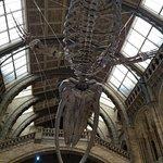 Φωτογραφία: Μουσείο Φυσικής Ιστορίας