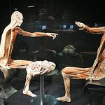 Foto van Body Worlds