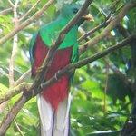 Billede af Guia Naturalista Olman Gonzalez