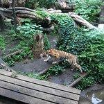 トラは元気に向かって襲うような仕草をします。