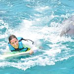 Dolphin Discovery Cozumel照片