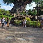 Disney's Animal Kingdom Foto