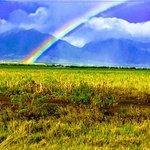 Beautiful Maui -