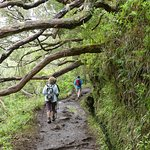 Photo of Madeira Explorers