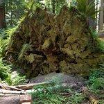 صورة فوتوغرافية لـ Redwood Highway