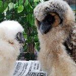 Owlpark