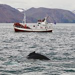 Photo of Salka Whale Watching