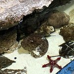 Foto van Dubai Aquarium & Underwater Zoo
