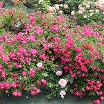 Photo de Les Chemins de la Rose