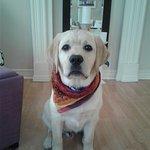 Baxter at 6 months