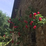 Bild från Tuscan Wine Tours by Grape Tours